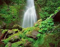 Georgia, Mtirala National Park, Georgia, waterfall