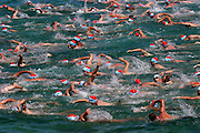 Hundreds of swimmers participate in the annual 2-kilometer (1.25-mile) ocean race at Bondi Beach in Sydney, Australia.  (From the book What I Eat: Around the World in 80 Diets.)
