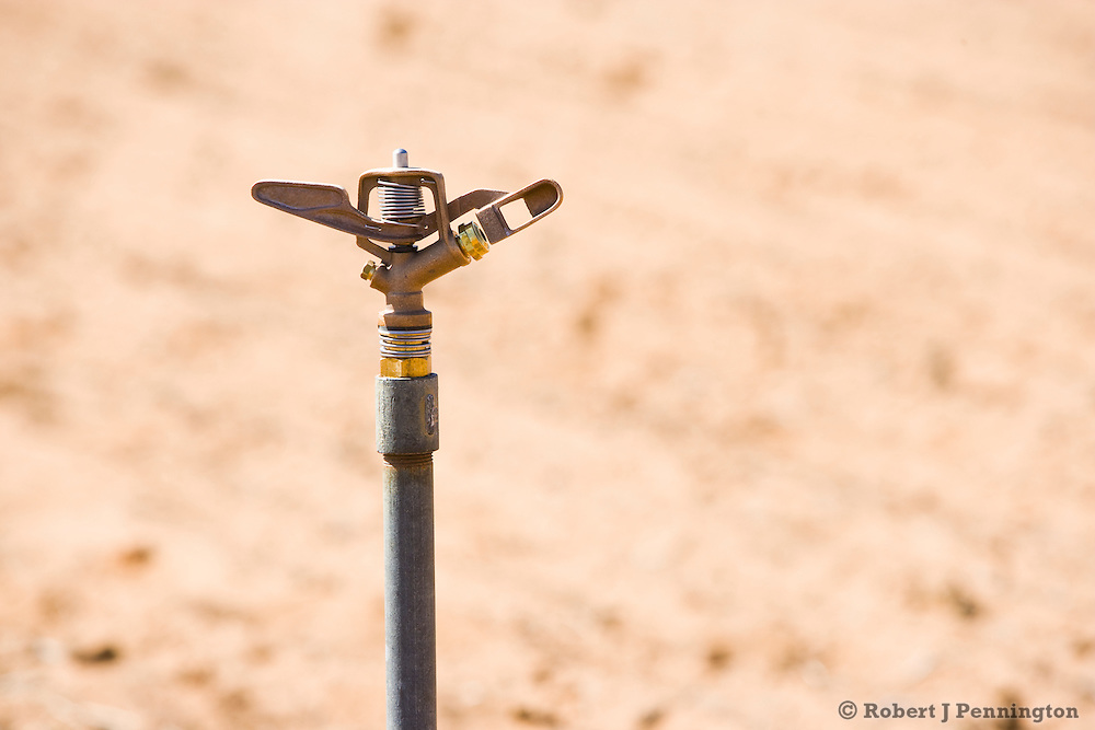 A dry sandy field is irrigated with sprinkler hand lines.