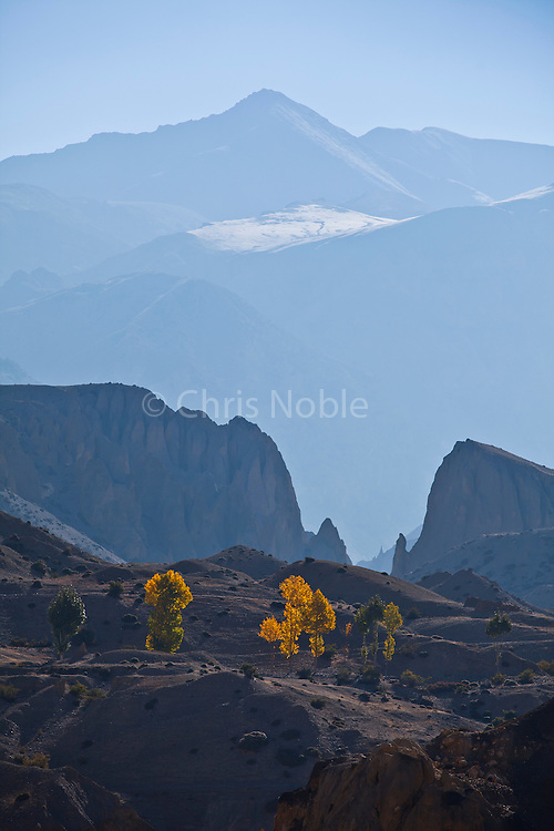 Autumn trees and mountains illuminated by morning light near Yara in Nepal's Mustang region.