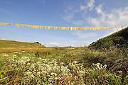 Darjeeling, West Bengal, India prayer flags