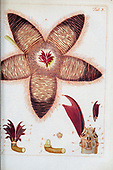 Botany illustrations