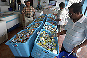 Shoppers browse tinned fish at the state-run MIFCO shop also exporting 100% Maldivian seafoods to Europe and Asia .