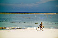 A young man rides his bike through the white sand beach while people harvest seaweed in the distance. Matemwe, Zanzibar, Tanzania.