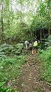 Manawili Trail, Windward Oahu, Hawaii