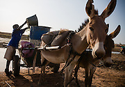 A boy fills barrels loaded on a donkey-pulled cart with water at the Dikunani dam in Savelugu, northern Ghana, on Friday March 9, 2007. The only of four water sources that has not completely dried out around Savelugu, the pond is used by hundreds of people daily who sometimes walk several kilometers to fetch water. Despite the presence of mesh filters available to people who come get water, cases of guinea worm in the area have gone up sharply in the recent months.
