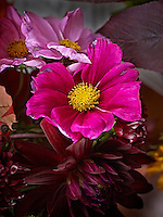 Höstblommor fotograferade av Fotograf Thomas Carlgren i Stockholm,Autumn Flowers photographed by Photographer Thomas Carlgren in Stockholm Sweden,
