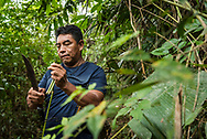 Manaus, Amazonia, Brazil, November 2018.  jungle guide Samuel Basilio. Exploring the Amazone Rainforest with Leo and Vanessa of Amazon Emotions. The Amazone river and Rio Negro connect the small rain forest communities that dot the region. River Amazon (Portuguese: Rio Amazonas; Spanish: Río Amazonas) of South America is the largest river in the world by volume, with total river flow greater than all the other top ten largest rivers flowing into the ocean combined. The Amazon drains an area of some 6,915,000 square kilometres (2,670,000 sq mi), or some 40 percent of South America. Photo by Frits Meyst / MeystPhoto.com