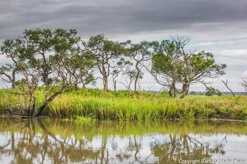 Trees stand on a coastal salt marsh hammock.