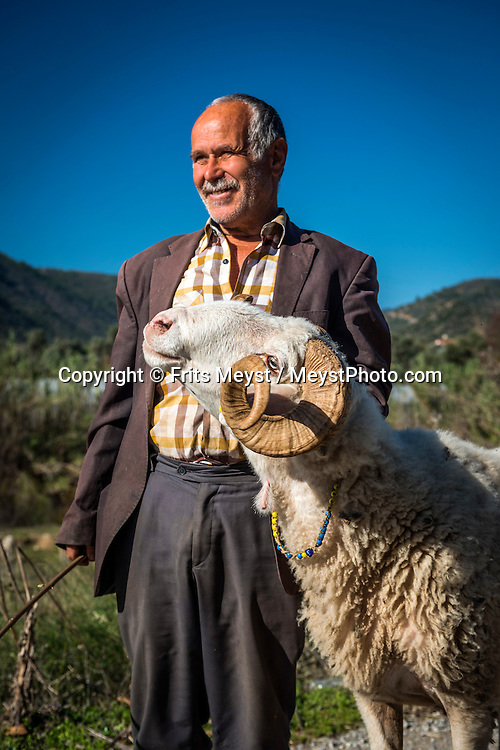 Milas, Turkey, March 2014.  A shepherd presents his ram. Hiking on the Carian Trail section from Kargicak via sarikaya and Ketendere to Comakdag. The Carian Trail runs through pine scented forests along the coastal mountains of Western Turkey and is littered with ancient ruins, secluded coves with turquoise waters and little villages. more than 800km of ancient roads, shepherd paths and forest trails form Turkey's longest hiking trail. Photo by Frits Meyst / MeystPhoto.com