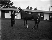 Bloodstock Sales at Ballsbridge.22/09/1958