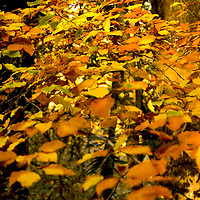 Autumn leaves<br />