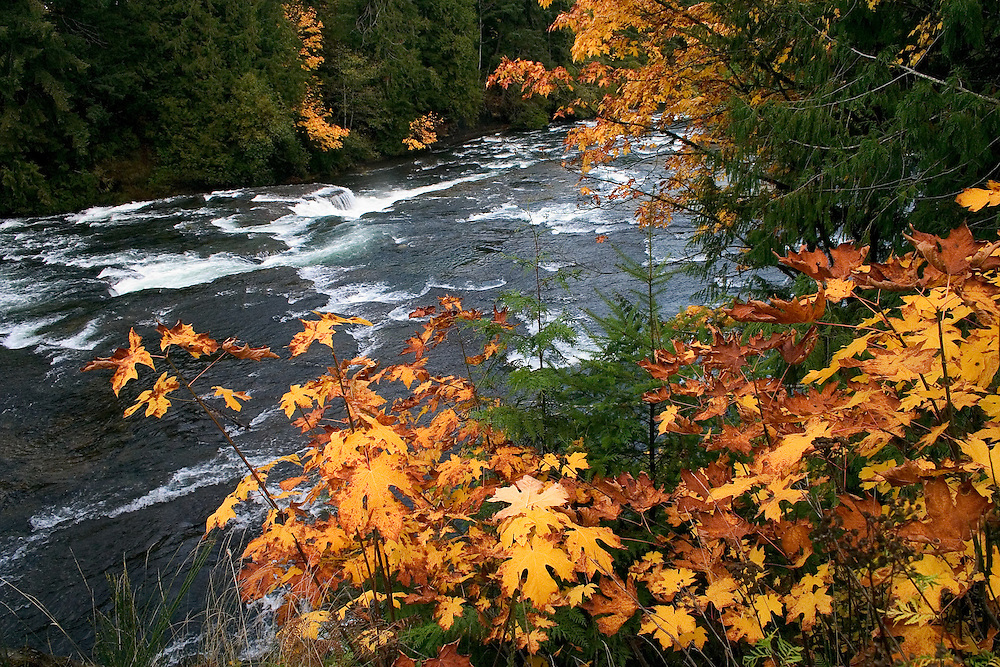 Strong flows in the Puntledge River, with fall colours along the shore, Vancouver Island BC