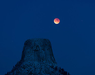Because this morning's lunar eclipse occurred with the moon close to the horizon instead of high overhead, it was particularly well suited for photography. I just needed something to frame the moon over, and I couldn't think of a better subject than Devils Tower. I did the math and figured out I would need to be just under 2 miles east of the tower to shoot it with the lens I had. The surrounding area has lots of hills, trees, and private land, but luckily there was a road in the right spot, which provided this view. What was supposed to be only flurries the evening before turned into 4 inches of fresh snow. The clouds didn't clear out until minutes before the eclipse began. As the moon became redder, the sky became bluer and the stars slowly faded away. Snow doesn't stay very long on the tower since the sun heats up the rock quickly and winds blow it off. But everything came together perfectly this morning to create a one of a kind view.