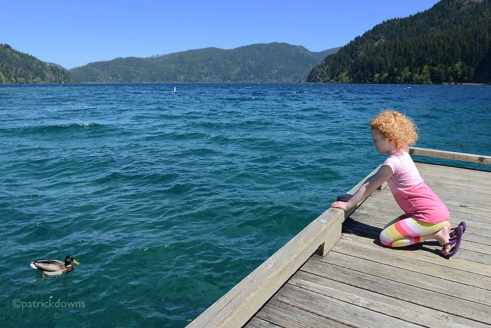 Young girl meets a mallard on a crystalline spring day at Lake Crescent, west of Port Angeles on the way to the ocean. It is a deep lake located entirely within Olympic National Park and is officially the second deepest lake in Washington. Unofficial depth measurements of more than 1,000 feet have been recorded.
