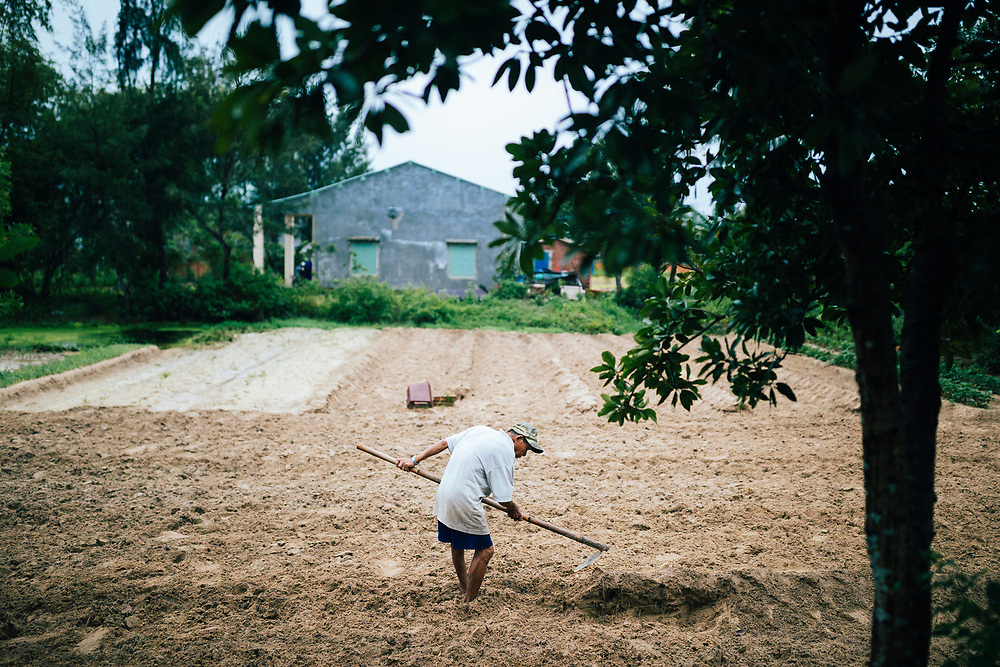 A man tends to his farmlands in the countryside outside of Hoi An, Vietnam.