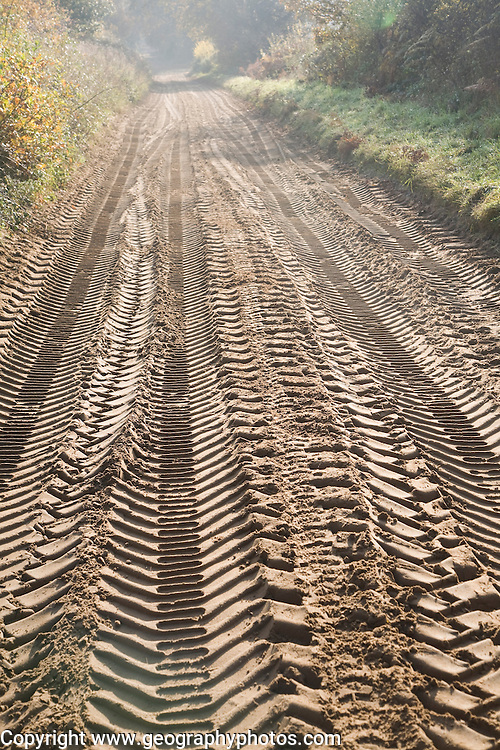 Tyre mark indentations in sandy soil of unsurfaced rural road crossing the Suffolk Sandlings at Sutton heath, Suffolk, England