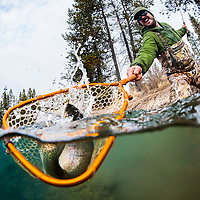 A fisherman netting a large trout<br />