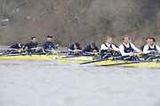 Putney, GREAT BRITAIN,    Both Crews Bull in the Background exhausted after the 41/4 mile trial race,  the 2008 Varsity/Oxford University [OUBC] Trial Eights, raced over the championship course. Putney to Mortlake, on the River Thames. Thurs. 11.08.2008 [Mandatory Credit, Peter Spurrier/Intersport-images].Crews - .Bull, Bow. Colin KEOGH, 2. Douglas BRUCE, 3.Michal PLOTOWIAK, 4. David HOPPER, 5. Aaron MARCOVY, 6. Ben HARRISON, 7. Sjoerd HAMBURGER, Stroke Colin SMITH and Cox Philip CLAUSEN-THUE...Bear, Bow. Tim FARQUHARSON, 2. Ben ROSENBERGER, 3. Mike VALLI. 4. Alex HEARNE, 6 Tom SOLESBURY, 7 George BRIDGEWATER, Stroke, Ante KUSURI and Cox Adam BARHAMAND. Varsity Boat Race, Rowing Course: River Thames, Championship course, Putney to Mortlake 4.25 Miles,