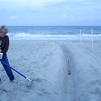Volunteer Linda Osowski clears a trench at a Sea Turtle nest in Carolina Beach, N.C. (Jason A. Frizzelle)