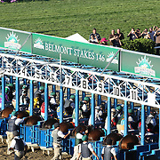 Horses in the starting gate during the 146th Running of the Belmont Stakes, Belmont  Park, Elmont. New York.  USA. 7th June 2014. Photo Tim Clayton