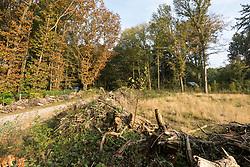 Laren, Het Gooi Noord Holland, Netherlands, natuurbrug