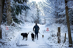 © Licensed to London News Pictures. 30/01/2019. Sevenoaks, UK. A woman walks her dogs through a frozen landscape near Sevenoaks as snow hits the south east for the first time this winter. Photo credit: Peter Macdiarmid/LNP