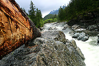 Log rests beside Kennedy River, Vancouver island BC