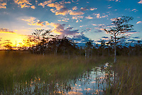Dawn in the Big Cypress National Preserve in the Gator Hook Strand.