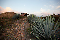 """Full Moon Over Agave""- This sunset, moon and agave plant were photographed at Parador San Sebastian, Mexico."