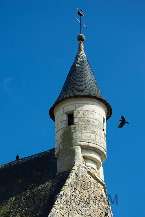 Pair of Jackdaws, Corvus monedula, nesting in a turret in Parce-Sur-Sarthe, France