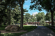 The pinetum in Central Park with a view of the El Dorado towers