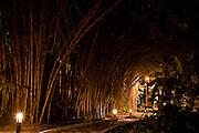 Goiania_GO, Brasil...Bosque dos Buritis em Goiania...The Bosque dos Buritis in Goiania...Foto: BRUNO MAGALHAES / NITRO
