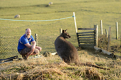 EXCLUSIVE: An Australian man has created his own Outback outpost 11,000 miles from home on the Shetland Islands – and he even has WALLABIES. Tasmanian Dave Kok, 42, has built his own Aussie oasis on the Scottish archipelago after deciding to settle there when he was travelling Europe. Now Dave lives with his Shetland native wife Louise, 38, and two daughters Caitlin, 11, and Ruby, aged four. Social care worker Dave came to the islands in the late 90s and since 2016 has been building his own watering hole choc-full of Australiana on the island of Burra. Dave's place 'The Outpost' is a renovated wooden porta cabin filled with Tasmanian beers, Tim Tams, books on bush craft and Aussie Rules sporting memorabilia. Locals use the Outpost as their local bar and meeting place, as the nearest pub or café is three bridges and three islands away. And visitors can now enjoy the Outpost's wallabies Ned and Kelly who David brought to the island this winter. Based on the Shetland Islands latitude the marsupials could be the most northerly of their species anywhere on the planet. Dave said visiting Australians are often surprised to find the antipodean paradise in such a remote location. 16 Feb 2018 Pictured: Pic from Dave Donaldson/ Magnus News Agency. Pic shows David Kok and wallaby Ned at his Aussie-themed Outpost in the Shetland Islands. An Australian man has created his own Outback outpost 11,000 miles from home on the Shetland Islands – and he even has WALLABIES. Tasmanian David Kok, 42, has built his own Aussie oasis on the Scottish archipelago after deciding to settle there when he was travelling Europe. Now David lives with his Shetland native wife Louise and two daughters Caitlin, 11, and Ruby, aged four. Social care worker David came to the islands in the late 90s and has built his own watering hole choc-full of Australiana on the island of Burra. David's place 'The Outpost' is a renovated wooden porta cabin filled with Tasmanian beers, Tim Tams, books
