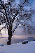 Idaho, Coeur d' Alene. A mature tree with snow covered bench on the North Shore of Lake Coeur d' Alene in winter. . PLEASE CONTACT US FOR DIGITAL DOWNLOAD AND PRICING.