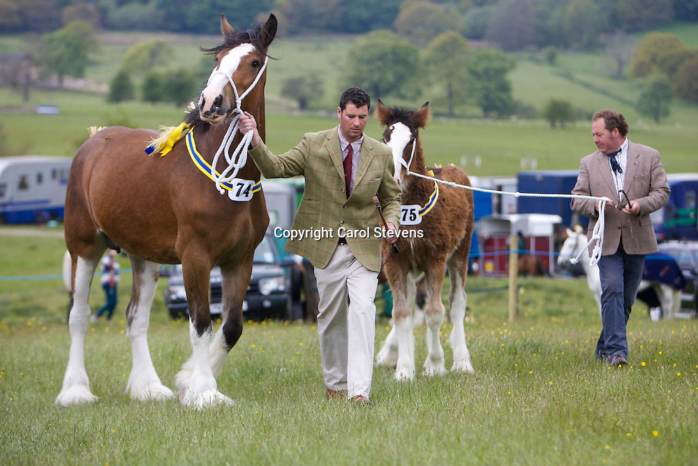Mr P Woof's Marieth Maizie (Sire - Marieth Major), Supreme Champion and her foal, Marieth Michaela (Sire - Red Brae Mascot), Champion Foal