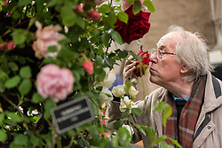 © Licensed to London News Pictures. 03/06/2016. London, UK. A visitor at the second annual London Rose Show, hosted by the Royal Horticultural Society, which opened today at the Horticultural Halls in Victoria, where rose growers are showing off their latest blooms. Photo credit : Stephen Chung/LNP
