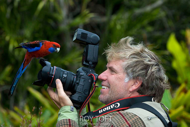 Wildlife photographer Roy Toft on location in Lamington National Park, Queensland, Australia posed with a Crimson Rosella bird perched on camera lens.