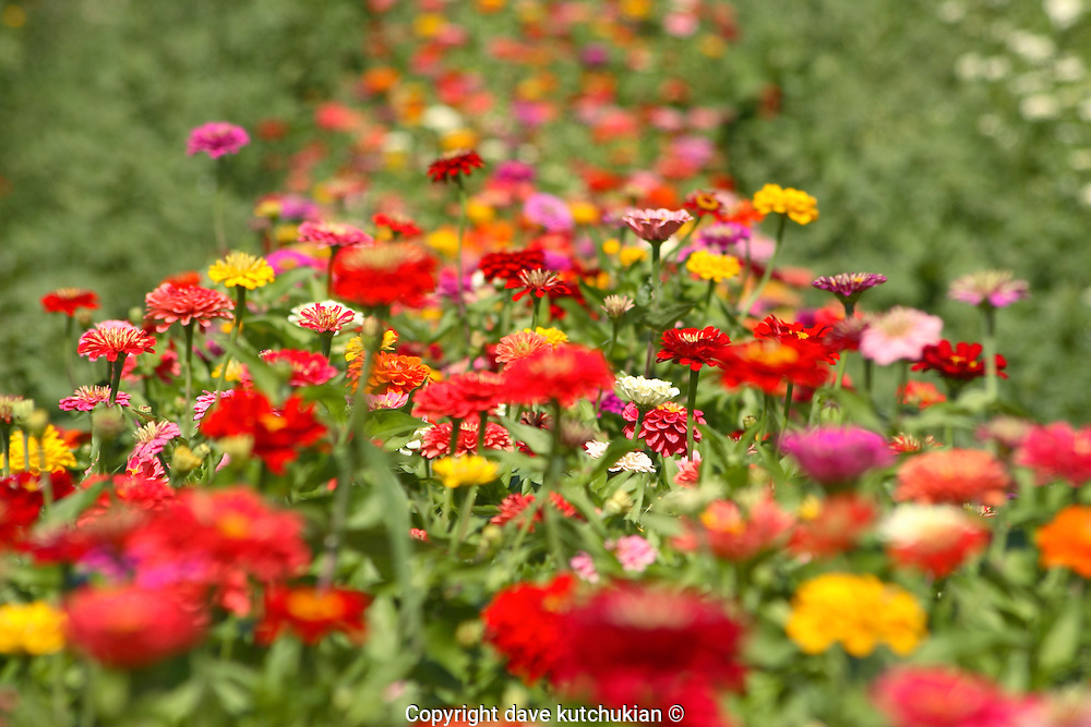 a wide long row of decorative summer flowers