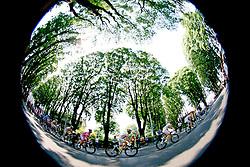 11 May 2008.92nd Giro d'Italia.Stage 03 : Grado - Valdobbiadene.Peloton in a tree-lined road..Photo by SPORTIDA / HOCH ZWEI / Grazia Neri / Yuzuru SUNADA
