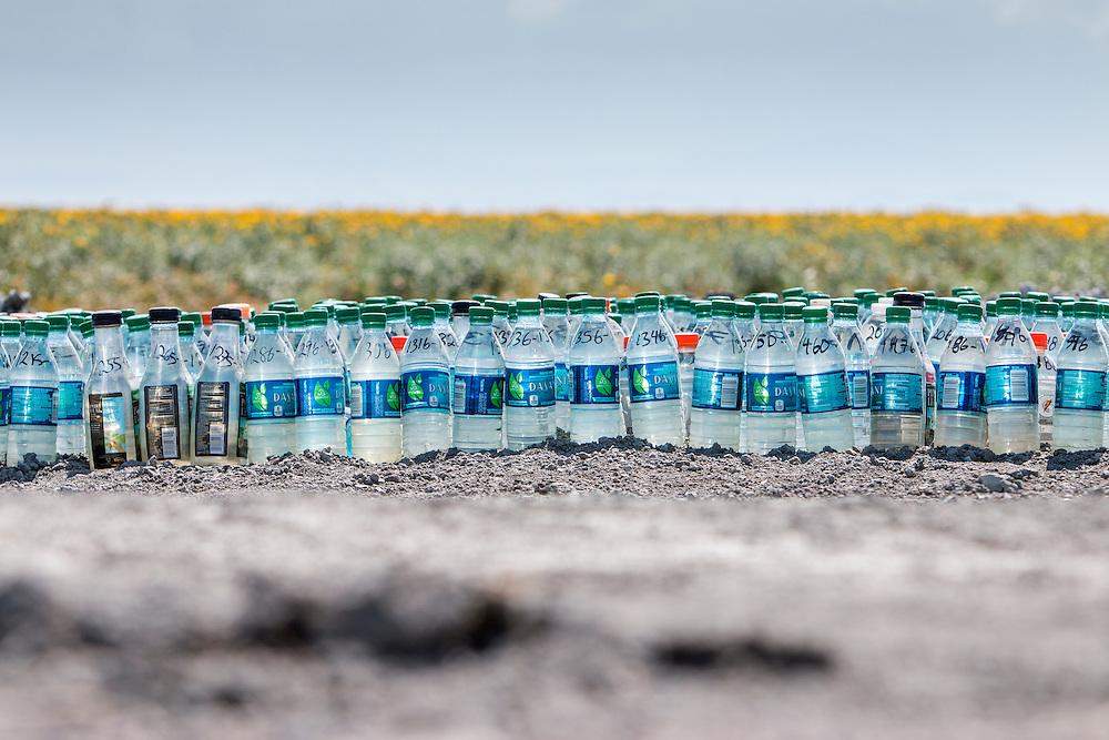 Vannprøver fra en av åkrene rundt Pixley. Grunnvann hentes nå fra flere hundre meter dype brønner, fra et grunnvanspeil som er 20.000 år gammelt. Tidenes verste tørke har rammet California, og verre skal det bli.