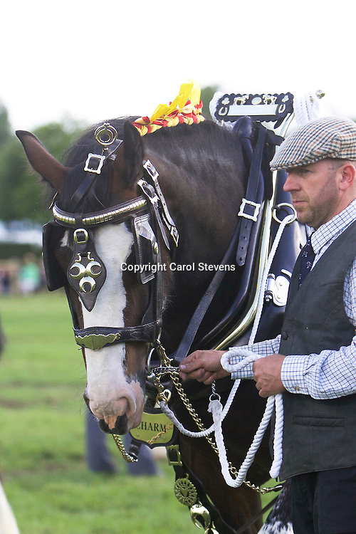 Bakewell Show 2016  Decorated Horse and Harness Classes