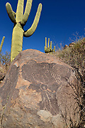 Petroglyphs on rocks near Saguaro cactus, (Carnegiea gigantea),  in the foothills of the Santa Catalina Mountains, Sonoran Desert, Catalina, Arizona, USA.