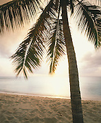 6211-1003 ~ Copyright: George H. H. Huey ~ Coconut palm [Cocos nucifera] on the beach at Hawksbill Bay, at sunset. West coast Antigua. Leeward Islands, Lesser Antilles, Caribbean.