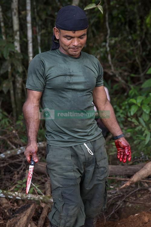 El Diamante, Meta, Colombia - 17.09.2016        <br /> <br /> A FARC fighter holding a bloody knife while he slaughter a cow near a guerilla camp during the 10th conference of the marxist FARC-EP in El Diamante, a Guerilla controlled area in the Colombian district Meta. Few days ahead of the peace contract passing after 52 years of war with the Colombian Governement wants the FARC decide on the 7-days long conferce their transformation into a unarmed political organization. <br /> <br /> Ein FARC Kaempfer haelt ein blutiges Messer in seiner Hand, waehrend er im Guerilla-Camp der zehnten Konferenz der marxistischen FARC-EP in El Diamanten eine Kuh schlachtete. El Diamanten liegt in einem von der Guerilla kontrollierten Gebiet in der kolumbianischen Region Meta. Wenige Tage vor der geplanten Verabschiedung eines Friedensvertrags nach 52 Jahren Krieg mit der kolumbianischen Regierung will die FARC auf ihrer sieben taegigen Konferenz die Umwandlung in eine unbewaffneten politischen Organisation beschlieflen. <br />  <br /> Photo: Bjoern Kietzmann