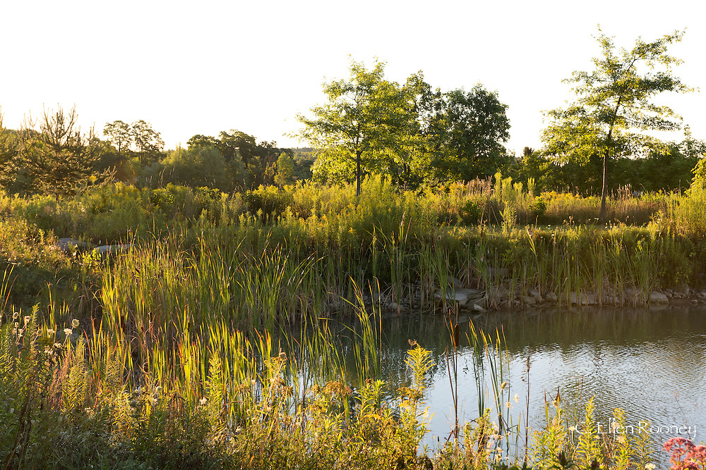 Wild flowers around a pond in a country garden in Westerlo, New York, U.S.A.