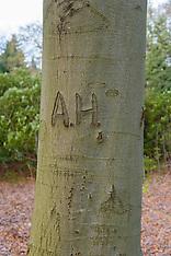 2014 Arborglyphs, Beschreven bomen.