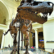 Field Museum of Natural History, Chicago, Illinois