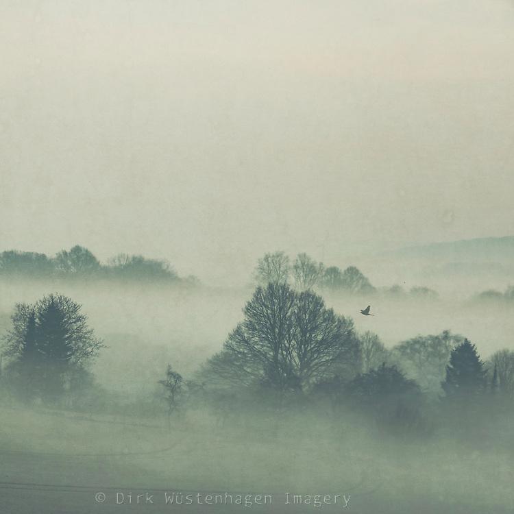Rural landscape shrouded in morning fog - textured photograph
