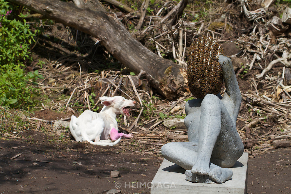 dOCUMENTA (13) in Kassel, Germany..Karlsaue..Pierre Huyghe. Untitled, 2011-12..Resident dog and bees.